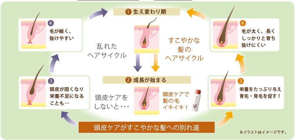 ヘアサイクルのイメージ図