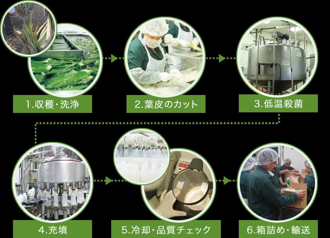 1.収穫・洗浄→2.葉皮のカット→3.低温殺菌→4.充填→5.冷却・品質チェック→6.箱詰め・輸送