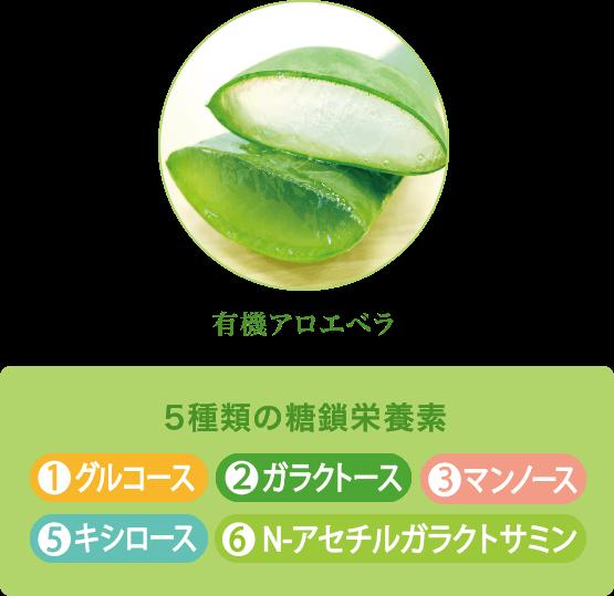 5種類の糖鎖栄養素|1.グルコース/2.ガラクトース/3.マンノース/5.キシロース/6.N-アセチルガラクトサミン